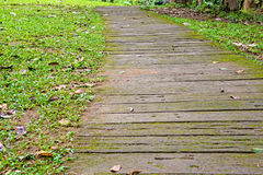 Walkway through the woods Royalty Free Stock Photo