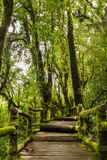Walkway into the woods. In rain-forest Royalty Free Stock Photo