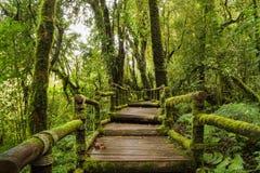 Walkway into the woods Stock Image
