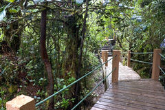 Walkway through World's Oldest Mossy Forest Royalty Free Stock Photography