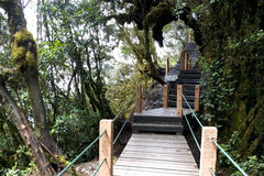 Walkway through World's Oldest Mossy Forest Royalty Free Stock Photos