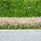 Walkwayand pink flowers with green plants background Royalty Free Stock Photography