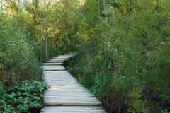 Walkwayon de madera de la bobina los lados de los arbustos verdes Foto de archivo
