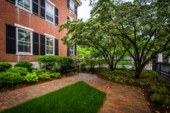 Walkways and brick building on the campus of Brown University, i Stock Photo