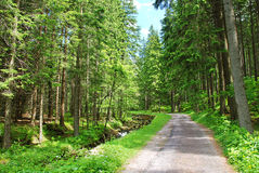 Walkways in Krkonose Royalty Free Stock Photo