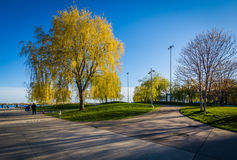Walkways and spring color at the Harbourfront in Toronto, Ontari. O Royalty Free Stock Photography