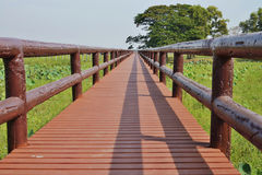Walkways to see birds at Bueng-Boraphet lake. Stock Image