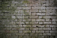 The Wall. Moldy brick background Stock Images
