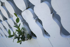 The Wall. A details of a house wall, with a wild plant climbing it Stock Images