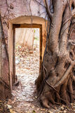 The wall of an ancient fortress is covered with tree roots. The wall of an ancient fortress with a doorway is covered with tree roots Royalty Free Stock Photo