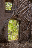 The wall of an ancient fortress with trees sprouting through it. With a window and a passage Stock Photos