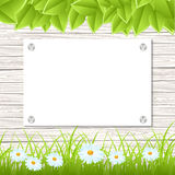 Wall with announcement. Wall with a piece of paper and green grass and leaves. Vector illustration Royalty Free Stock Image
