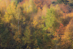 Wall of Autumn Forest Royalty Free Stock Photos