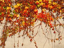 Wall with autumnal colored leaves Stock Image