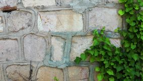 The wall background and Leaves. Video stock video