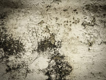 Wall background photography. Wall background of concrete photography Royalty Free Stock Photos