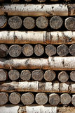 Wall from birch logs Stock Images