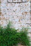 Wall with blocks and bush Stock Photography