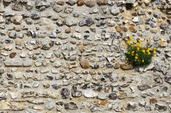 Wall in Bloom. Flowers growing on a castle wall Stock Photography
