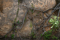 Wall and branches. Branches on the wall on Prison Island in Tanzania Stock Photo