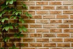 Wall, Brick, Brickwork, Wood Stock Photo