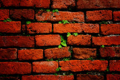 Wall Brick pattern Stock Photography