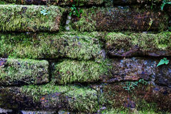 The wall from bricks with green moss for background. Royalty Free Stock Photography