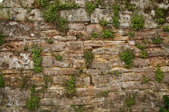 Wall of bricks and greens Stock Images