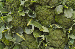 Wall of Broccoli heads Royalty Free Stock Photo