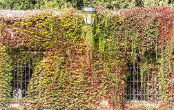 Wall with brown and green leaves Royalty Free Stock Images