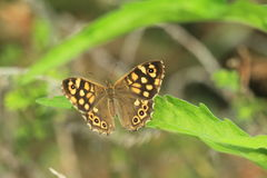 Wall brown Royalty Free Stock Images
