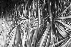 Wall of the building made from dried palm leaves Royalty Free Stock Images