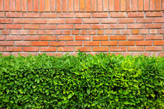 Wall and bush. In park stock photography