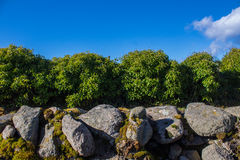 Wall/Bush/Sky. A wall in front of a bush in a picturesque scene stock photo