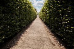 Way to the sky. Wall from bushes leading into sky in park Royalty Free Stock Image