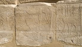 Wall with carved pictorial catalog of the exotic animals and plants from Asia in the Temple of Karnak, Luxor. Egypt royalty free stock images