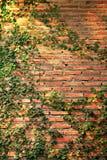 Wall climbers royalty free stock photography