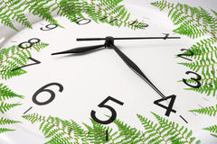 Wall Clock and Ferns Stock Image