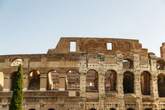 Wall of Coliseum and Juniper Royalty Free Stock Images