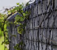 Wall with concrete elements overgrown with vines royalty free stock images