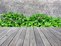 Wall concrete with  grass and wood floor.  Stock Photography