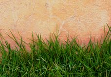 Wall  concrete with green grass.  Royalty Free Stock Images
