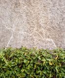 Wall concrete  with plants Stock Image