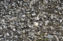 Wall of conquina shells, St. Augustine, Florida Royalty Free Stock Photography