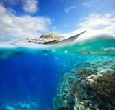 Wall Coral Reef with floating divers Royalty Free Stock Images