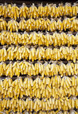 Wall of Corn. Corn cobs hanging across a home to dry in Yunnan Province, China Stock Images