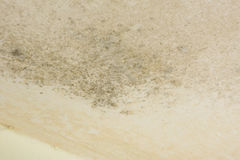 Wall cover with mould. A Wall cover with mould Royalty Free Stock Photo