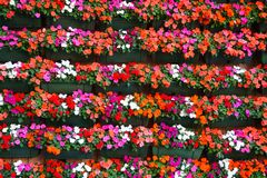 Wall covered with flowers, floral background pattern royalty free stock photography