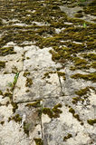 Wall covered with moss Royalty Free Stock Photo
