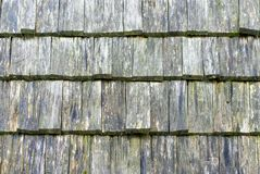 Wall covered by wooden tile, texture. stock images